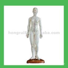 """Modelo de Pontos de Acupuntura Humanos, 19 """"Modelo de corpo de mulher"""