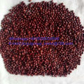New Crop Azuki Bean Food Grade