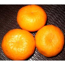 Proveedor profesional Fresh Mandarin Orange (50-54mm)