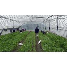 Large Plastic Agricultural Greenhouse for Vegetable