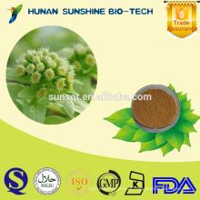 Producto saludable Extracto de petasita 8% / 15% Petasitin