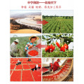 Ningxia Wolfberry Fruit