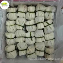 Factory bulk wholesale distribute dim sum snack IQF Frozen money bag