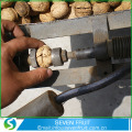 Natural Thin Skin Common Fresh Shelled Walnuts For Sale