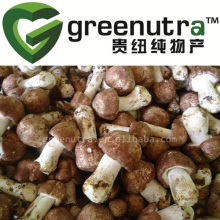 High quanlity Agricus Blazei Extract
