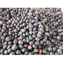 IQF Freezing/Freeze-Dried Organic Blueberry Zl-001 8