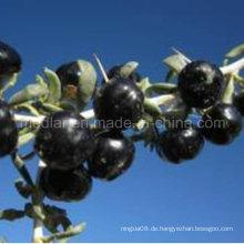 Mispel-nicht Pestizidrückstände Black Wolfberry
