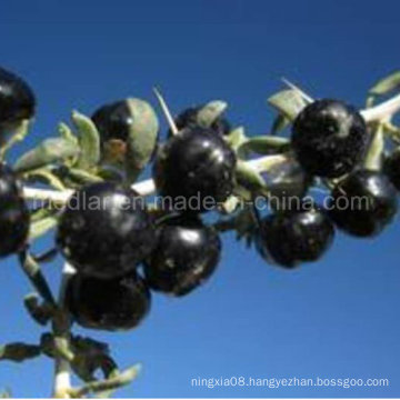Medlar Non Pesticide Residues Black Wolfberry