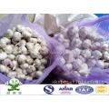 Embalaje del bolso del acoplamiento del ajo blanco 20kg del pequeño tamaño los 4.5cm