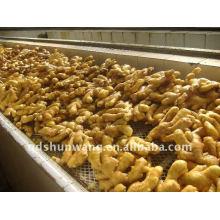 2012 agricultura alta qualidade fresco chinês gengibre raiz