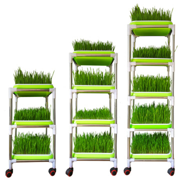Green Seedling Frame With Seedling Trays To Plant