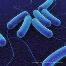 Probiotique pour l'alimentation animale