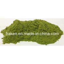 Poudre d'herbe de blé soluble dans l'eau / poudre de jus de blé