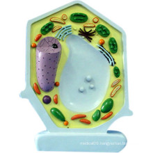 School Supplies Biology Teaching Plant Cell Model (R180114)