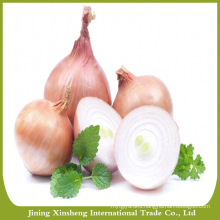 Cheap red onion from China factory