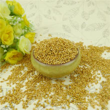 Yellow Millet in husk / foxtail for bird feeds