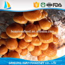 high quality market prices for nameko mushroom