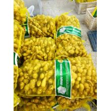 best Mesh Bag Packing Fresh Ginger