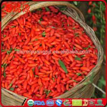 Venta caliente de china Orgánica secado Bayas de Goji
