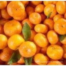 Orange fraîche à vendre en Chine