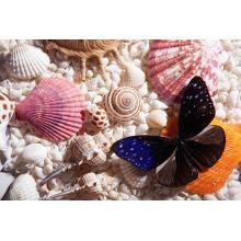 Оптовая торговля морскими ракушками