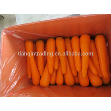 Chinese Carrot Supplier