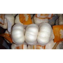 Свежий чисто Белый чеснок китайский (5,0 см, 5,5 см и выше)