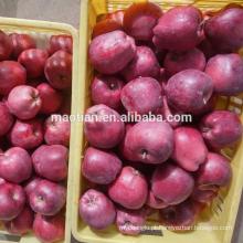Maçãs frescas de Huaniu
