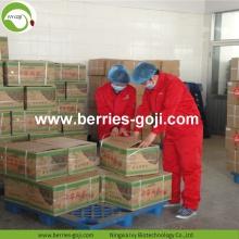 Wholesale Super Food Improve Eyesight Malaysia Goji Berries