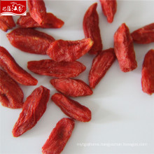Wholesale premium berries goji