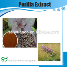 Extrait de plantes chinoises Extrait d'herbes Perilla