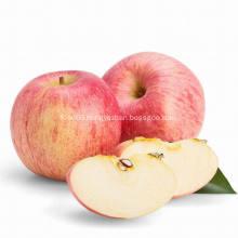 Round Fresh Cheap Fuji apple