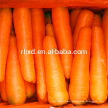 Good quality China fresh carrot from Shandong