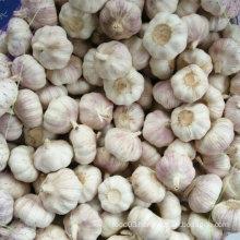 2016 New Harvest Fresh White Garlic, Pure White Garlic