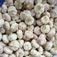 2016 Новый урожай Свежий белый чеснок, чистый белый чеснок