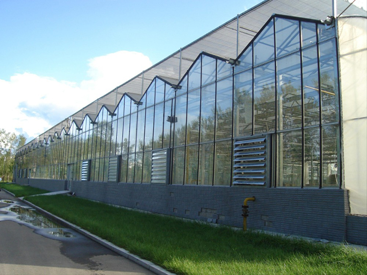 Multi-span Glass Greenhouse