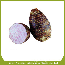 Green initiative taro in China