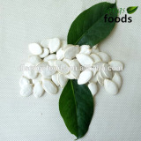 Best Quality Snow White Pumpkinseeds New Crop