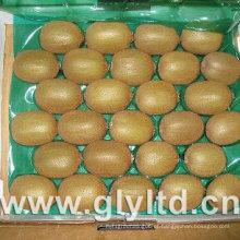 Fruta de quivi verde fresca chinesa exportada da qualidade