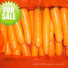 2015 New Crop Fresh Carrot (S grade and M grade)