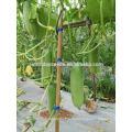 Suntoday зеленый овощ мощности, гибридные F1 органические кашпо для теплицы семена огурцов