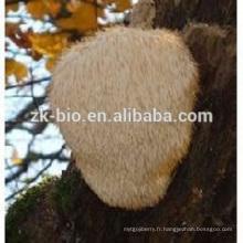 Nature et extrait organique d'extrait de Hericium erinaceus Poweder / extrait de champignon principal de singe