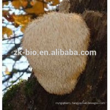 Nature and Organic Hericium erinaceus Extract Poweder /Monkey Head Mushroom Extract