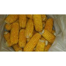 Forneça a alta qualidade do milho doce