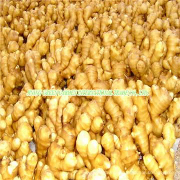 Ginger/Fresh