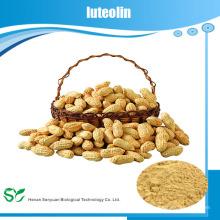 Haute crème d'arachide naturelle extraite Luteolin en poudre