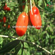 Высокое качество (ЅО2 бесплатно) ягоды Годжи, ЕС сертифицированный органический ягоды годжи, Нинся ягоды годжи