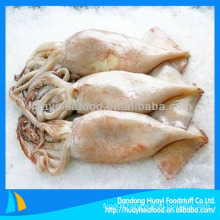Good quality new coming frozen squid