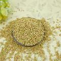 Sweet Buckwheat/pillow buckwheat