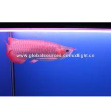 Arowana Red Lamp, Used in Aquarium Tank/Wall-mounted Fish Tank/Acrylic Fish Tank